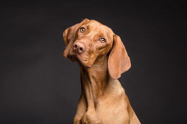 Melyek a legokosabb kutyafajták?