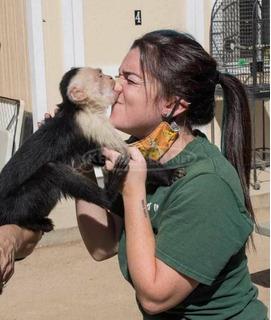 Imádnivaló kis kapucinus majmok készen állnak a jó otthonra