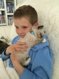 Fajtiszta Burmai cicák e -mail címe juliaanna625@gmail.com